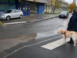 Les bandes d'éveil sont là, pas le passage protégé : le chien est perplexe....